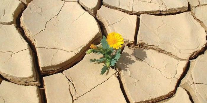 Coltivare-la-speranza